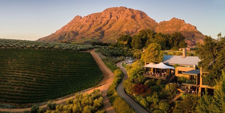 tokara vineyard south africa sydafrika